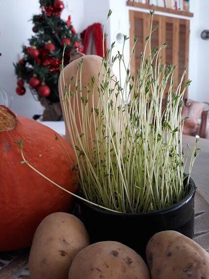 farine de lentilles excellente alternative à la farine blé sans gluten avec apports nutritionnels